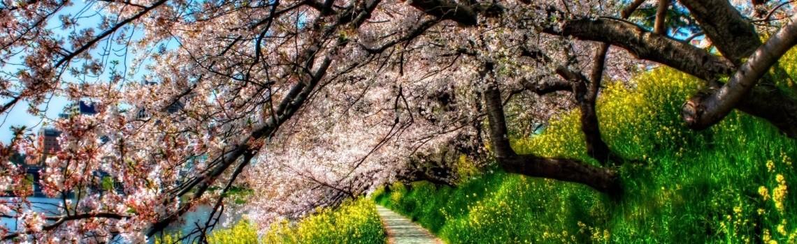 Journée Aïkido dirigée par LEMAN Senseï – le 24 mars 2019
